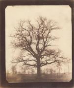 An Oak Tree in Winter, William Henry Fox Talbot, approx 1842–43