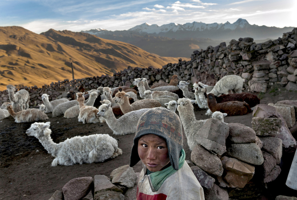 Child Herder in Bolivia © Renée C. Byer Following the death of his father, Alvaro Kalancha Quispe, 9, helps his family survive by herding. He opens the gate to the stone pen that holds the family's alpacas and llamas each morning so they can graze throughout the hillsides during the day. He then heads off to school, but must roundup the animals in the evening, in the Akamani mountain range of Bolivia in an area called Caluyo, about an hour from the city of Qutapampa. In this area of Bolivia's highlands, residents live approximately 13,000 feet above sea level, in homes without insulation, electricity or beds. Their water comes from streams that run off the snow-covered mountains.