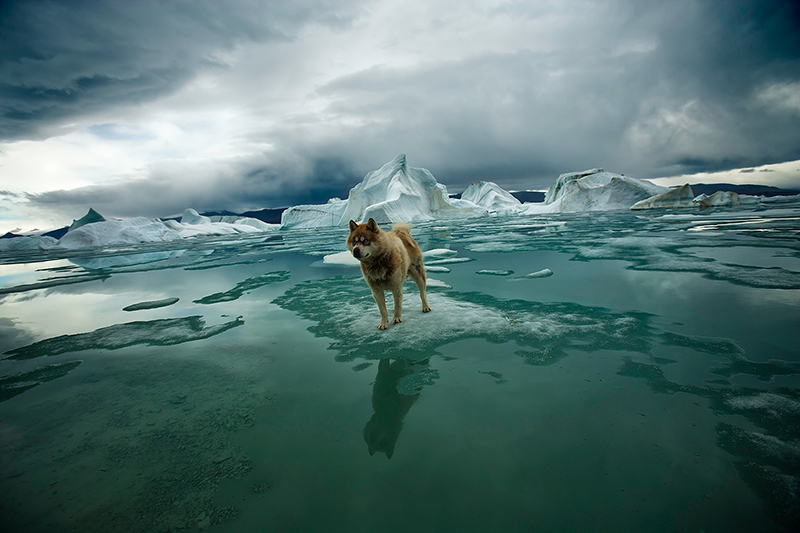 Arctica: The Vanishing North     Sebastian Copeland