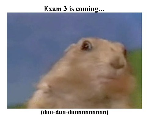exam 3 - prarie dog.jpg