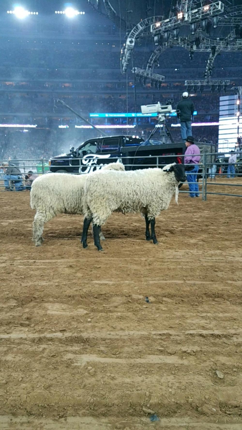 03_ Sheep.png