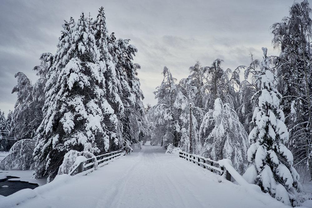 Zweden-2018-NIK01516.jpg