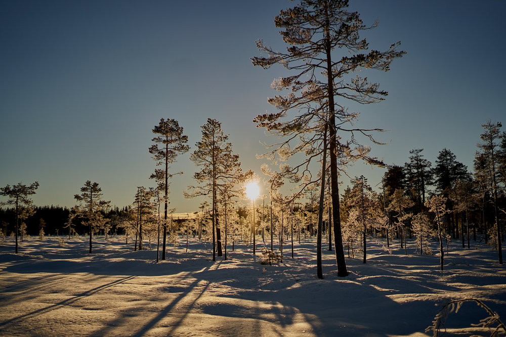 Zweden-2018-NIK01751.jpg