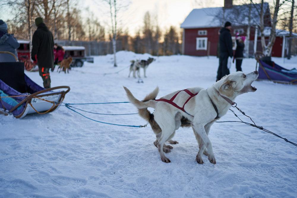 Zweden-2018-NIK01911.jpg