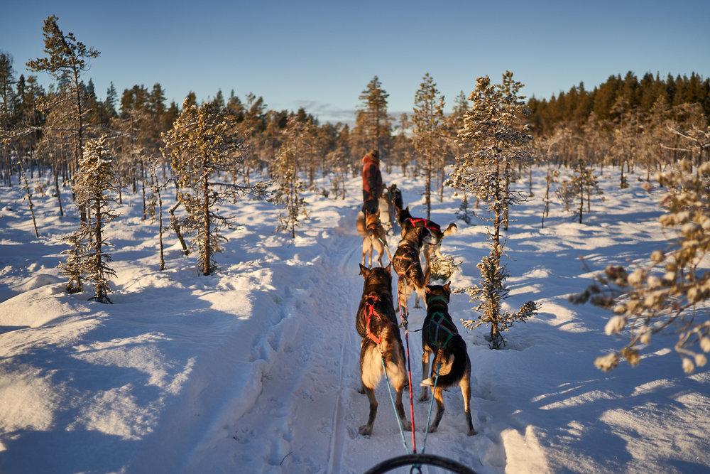 Zweden-2018-NIK01935.jpg