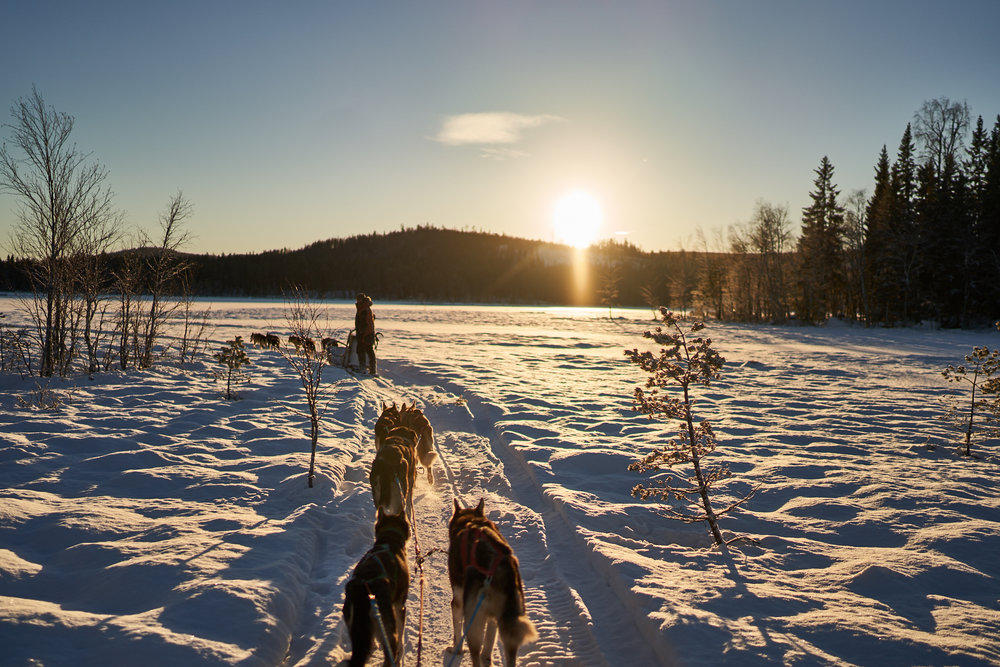 Zweden-2018-NIK01990.jpg