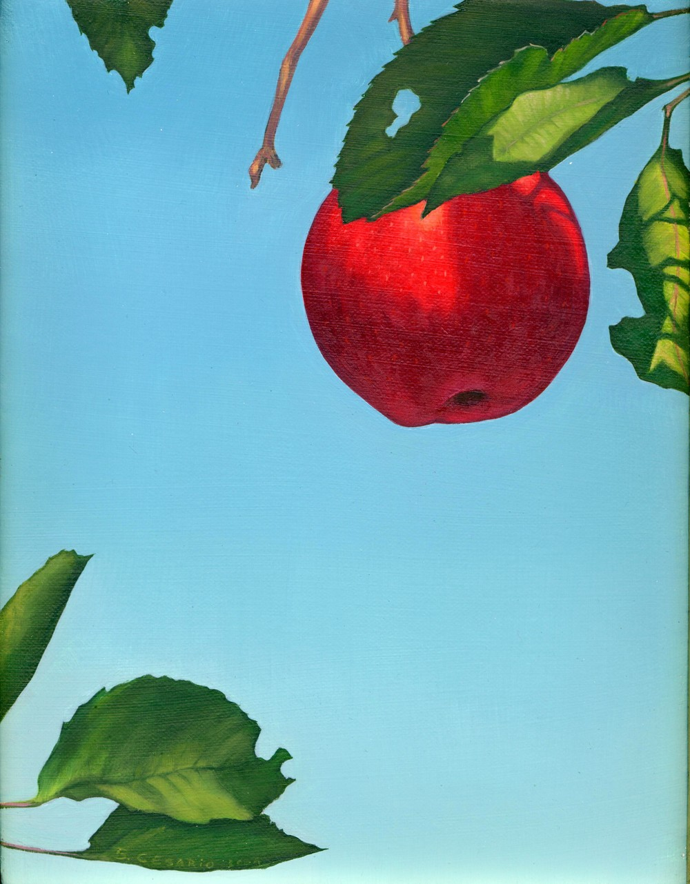 B Cesario   Apple   8x10 oil on canvas.JPG