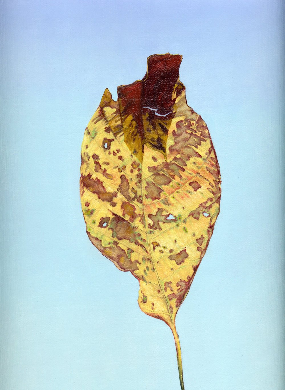 Brian Cesario  walnut leaf-oil on canvas-9x12.jpg