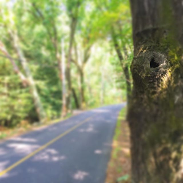 🌲💚 Take a moment and look around. You might find a heart shaped hole in a tree #JoyRyde