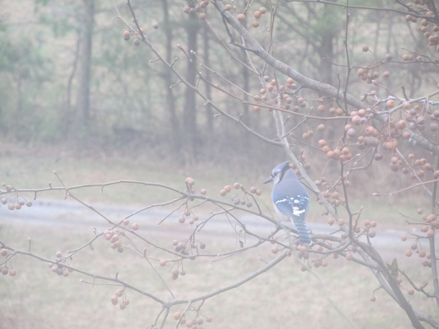 bird hill.JPG