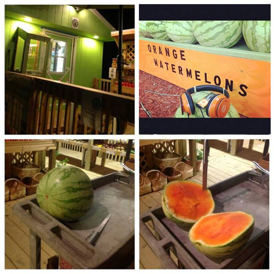We have been carrying the Orange Flesh Watermelon for the past 7 years.   Perkins Orchard   is the ONLY Place in the CAROLINA'S with them!       RETURNING THIS SUMMER 2018