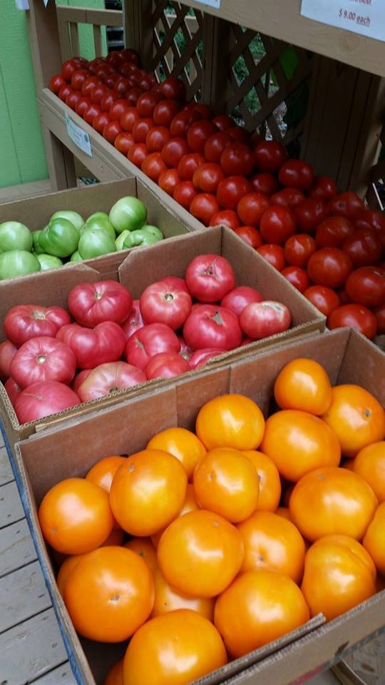 CAROLINA SUNGOLD, BEEFSTEAK, & GREEN TOMATOES! ALL AVAILABLE NOW ! The first frost of the season is coming soon! Get these delicious tomatoes while you still can.