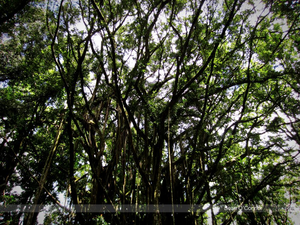 jungletree.jpg
