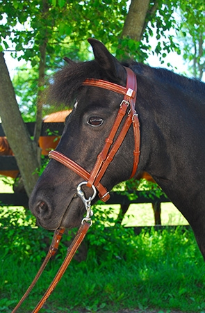 HARRISON FORD is a 10 year old Shetland pony who was born into a semi-feral herd run by New Bolton Veterinary School. This multi-talented pony helped teach vet students basic equine and veterinary skills before learning how to drive a carriage and be ridden. He even dabbled in some (small) jumping! He is loving program and is working on becoming our traveling ambassador pony.