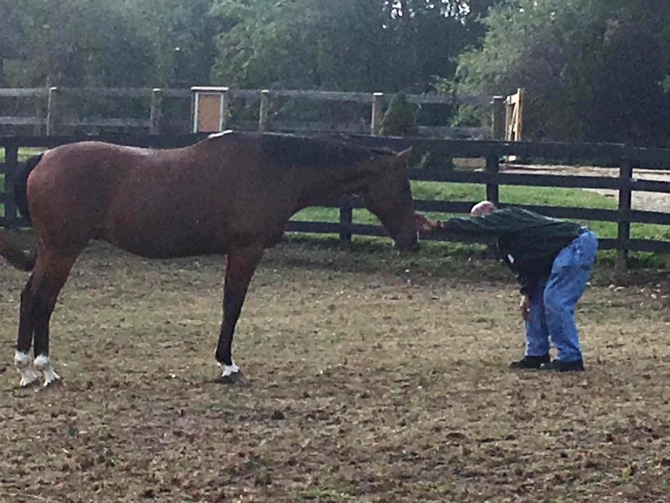 Horses As Partners.jpg