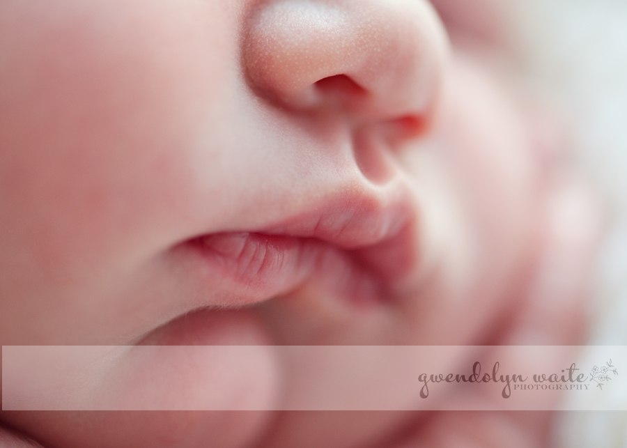 minnesota newborn portraits