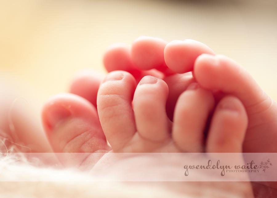 newborn portraits macro