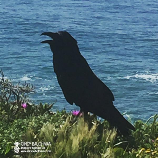 Bodega Bay Bird -www.stampedwithaloha.com