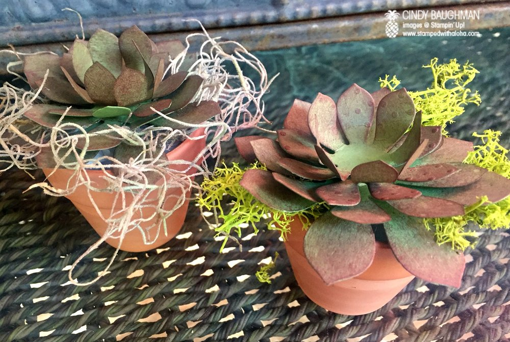 Paper Succulents - www.stampedwithaloha.com