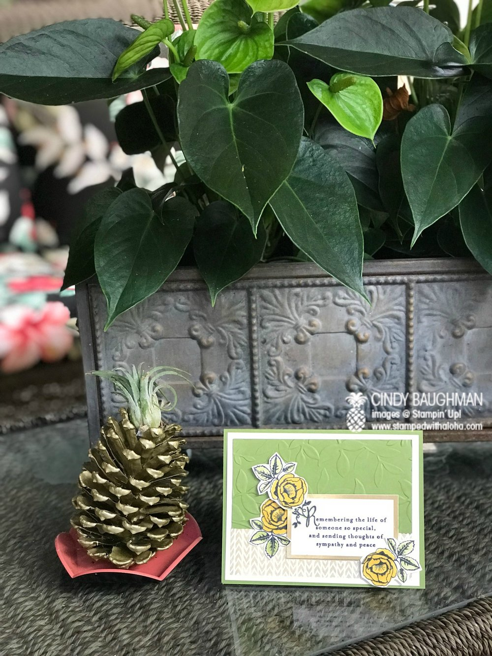 Pineapple Pine Cone from Sarina