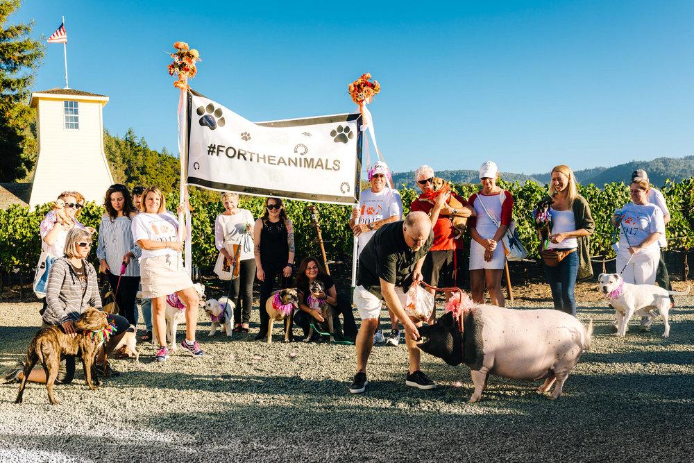 Pet Parade, WineaPAWlooza 2017. Photo:  Emma K. Morris