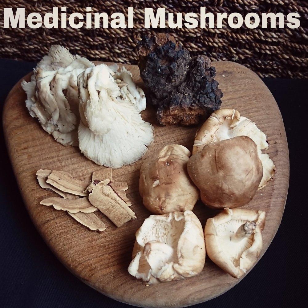 mushroom selection.jpg