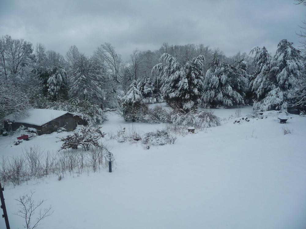 front yard snow 2015.jpg