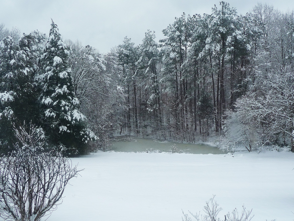 pond in snow 2015.jpg