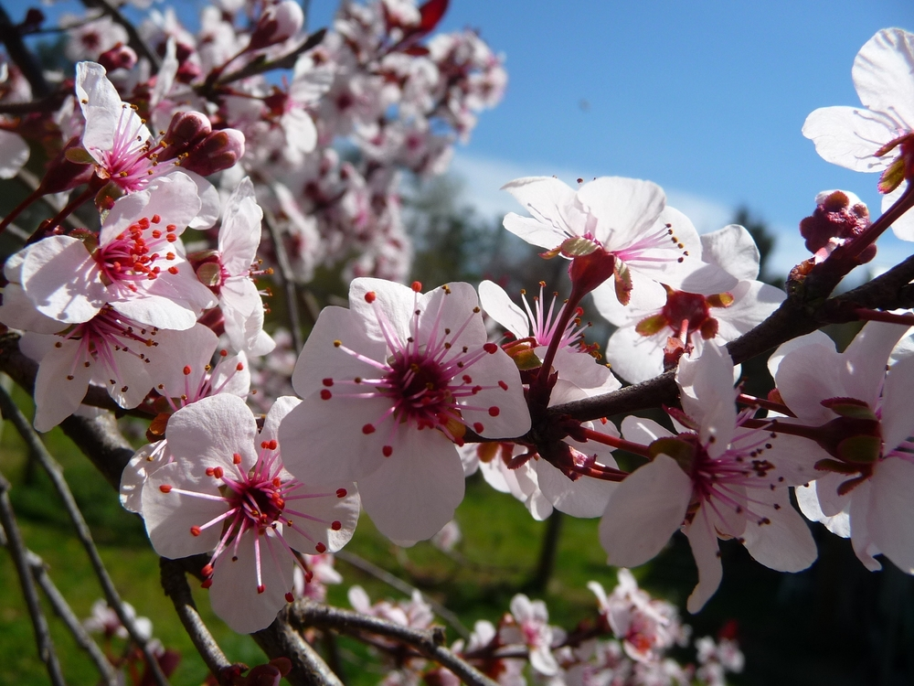 Spring! Finally!