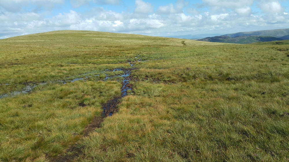 Very mossy ground that holds the water. A very slow slog.