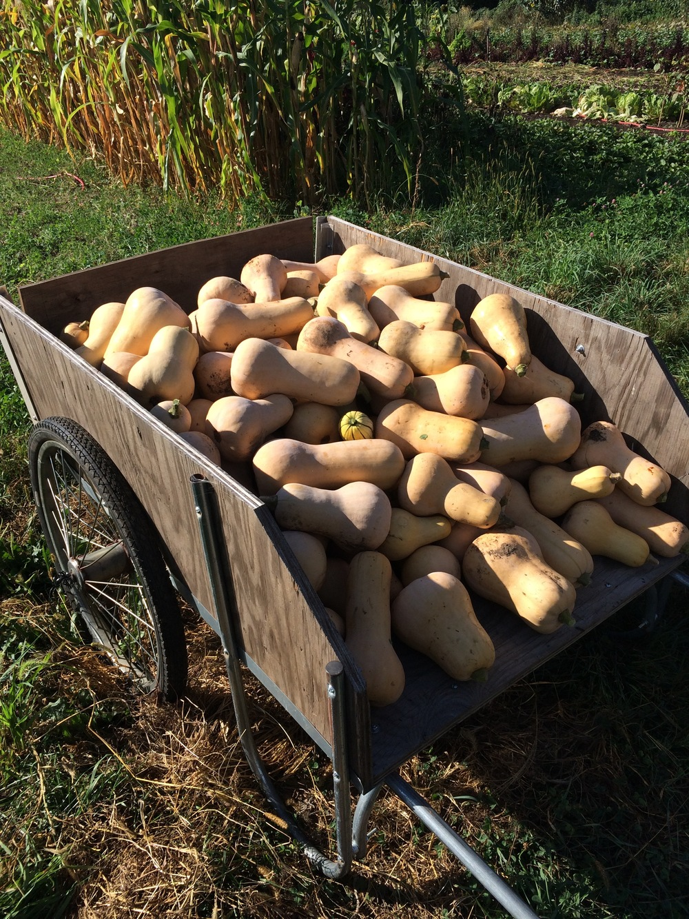 butternut cart.jpg