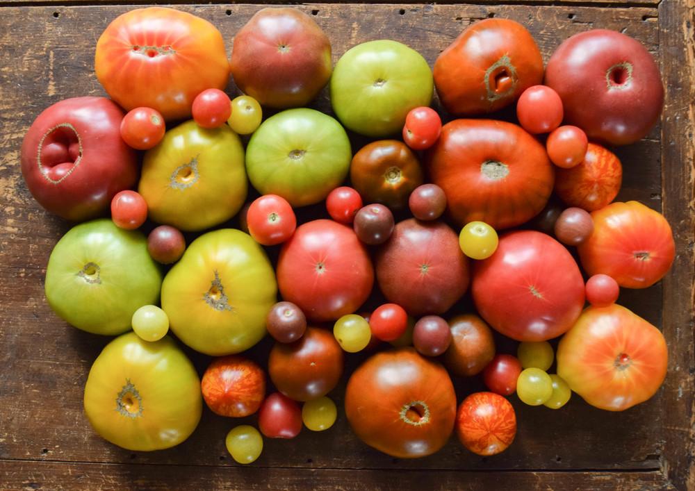 Tomato medley.jpg