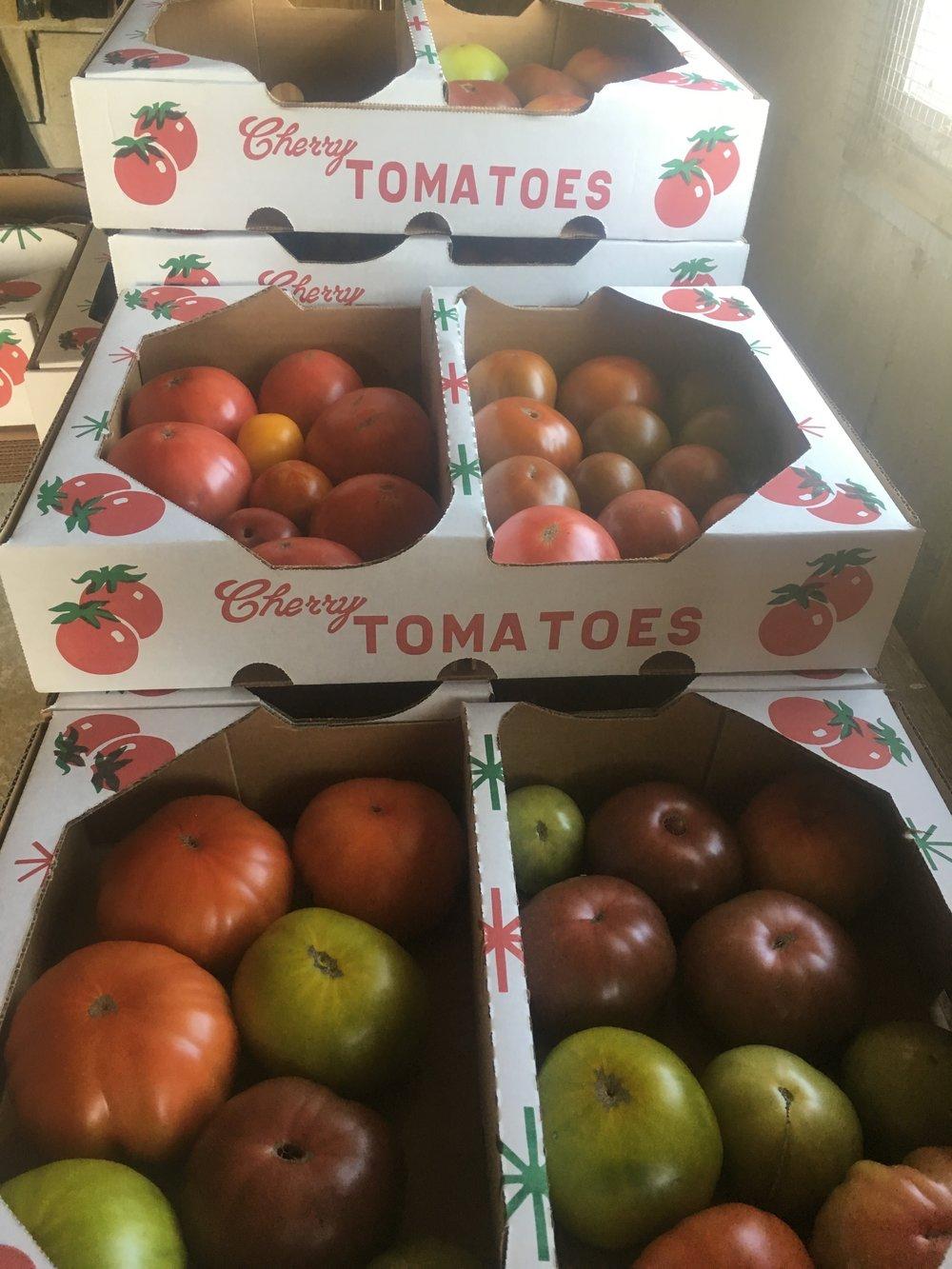 tomatoesresto.jpg
