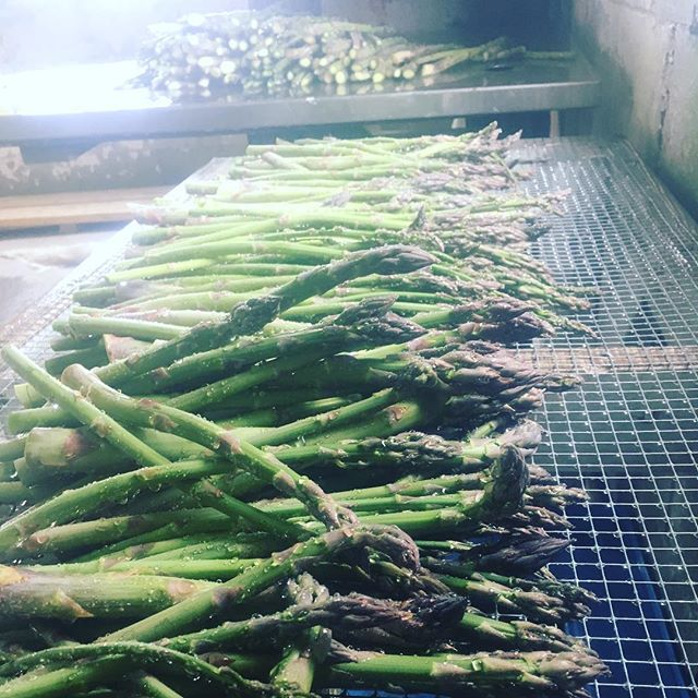 More asparagus than ever this year, with some new beds coming into production. We still have a few spring shares available. Starting 5/9, and including beauties like these. Link in bio