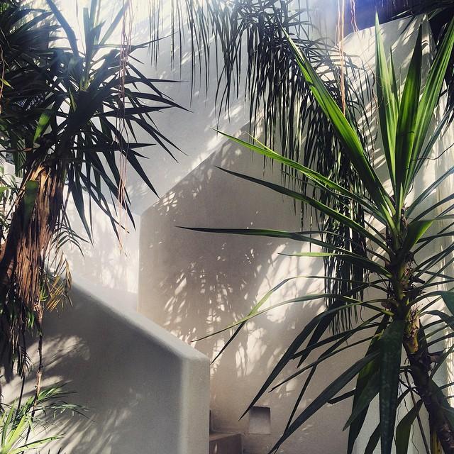 alibeletic-plantsandshadow.jpg
