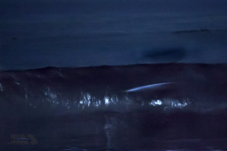 Full Moon Surf. Taking a break to connect with the cosmic.