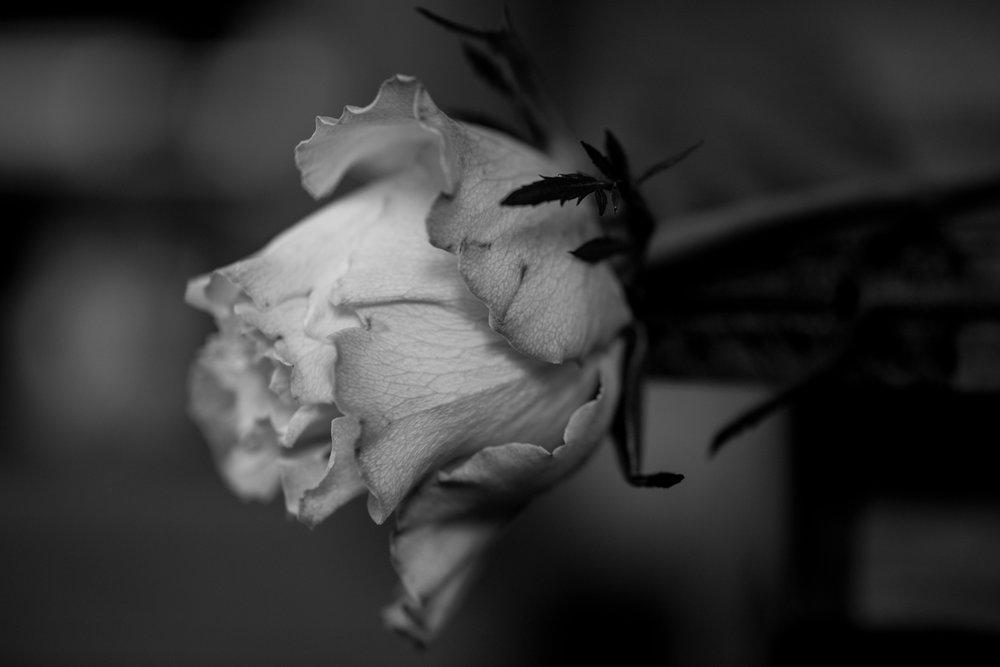 moms flowers-88.jpg