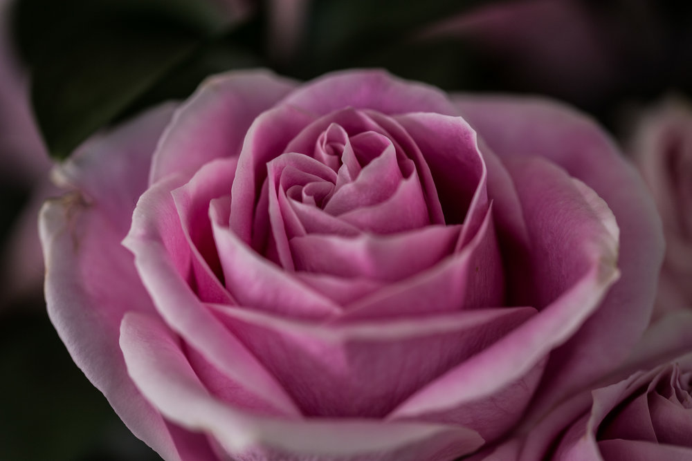 moms flowers-92.jpg