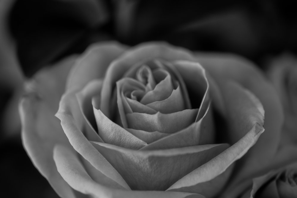 moms flowers-93.jpg