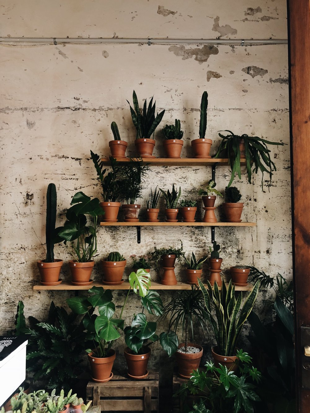 Espai Joliu  / / / My favorite plant and coffee shop.