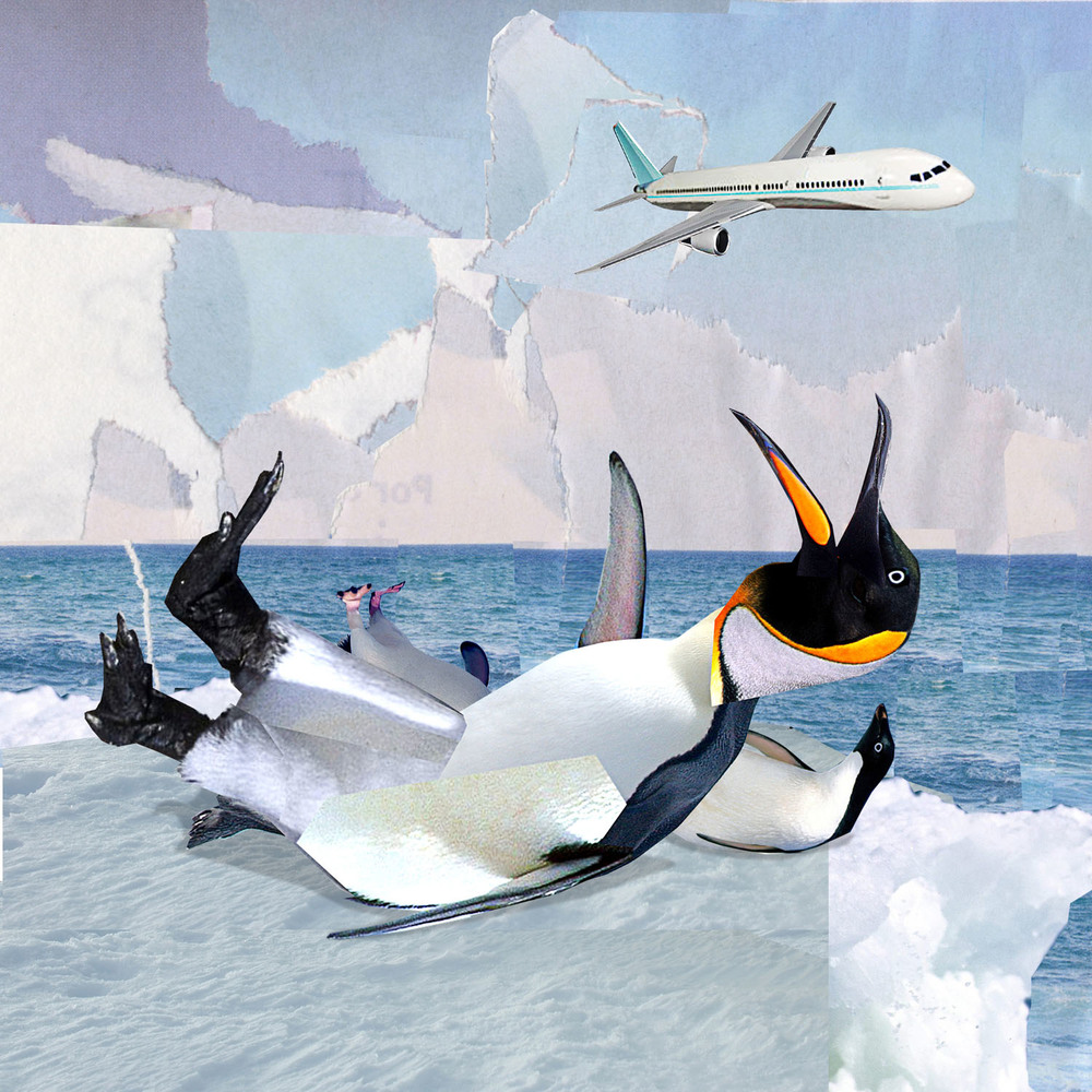 0012penguins copy.jpg