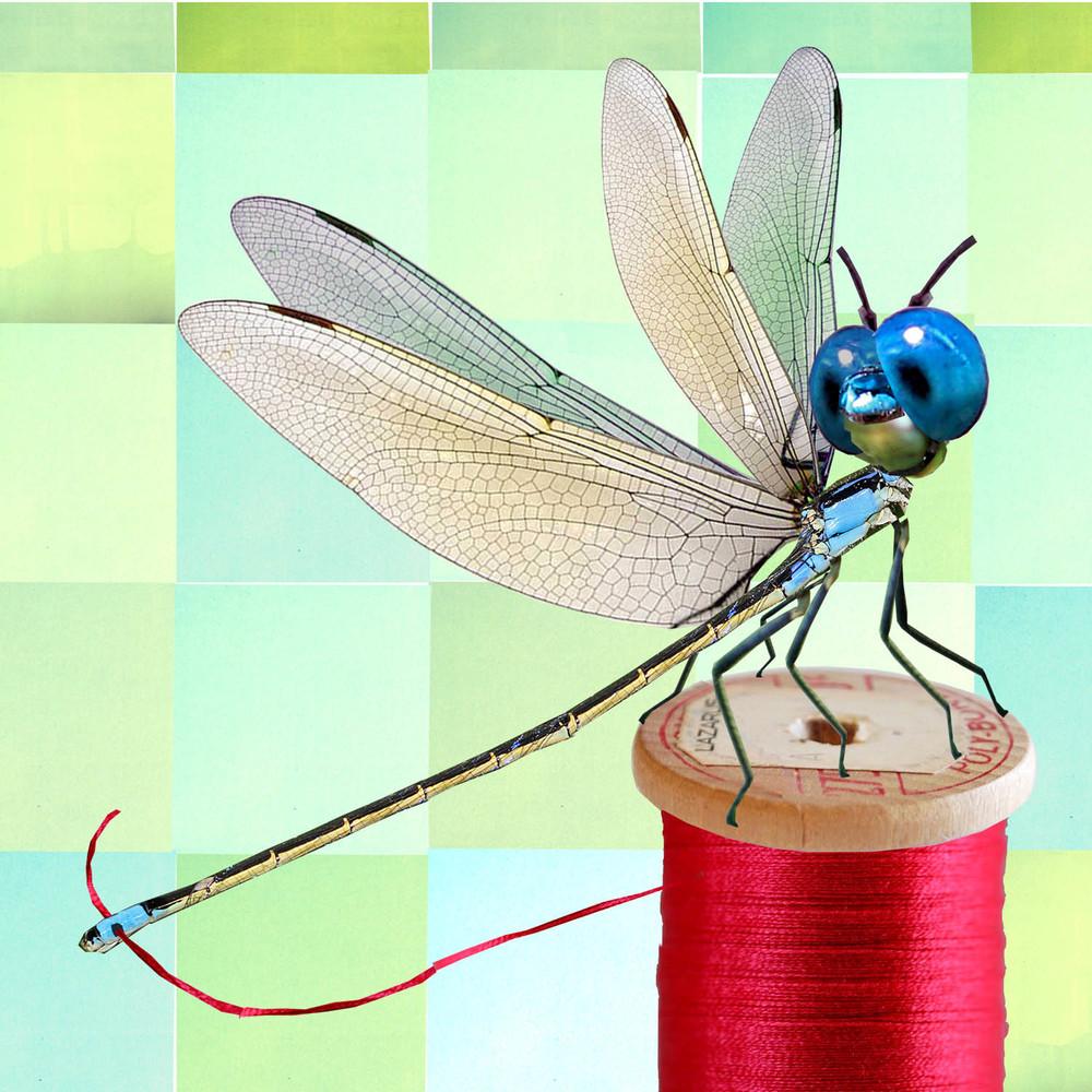dragonfly copy.jpg