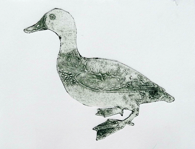 Duck  collagraph 9 x 7 inches 2015
