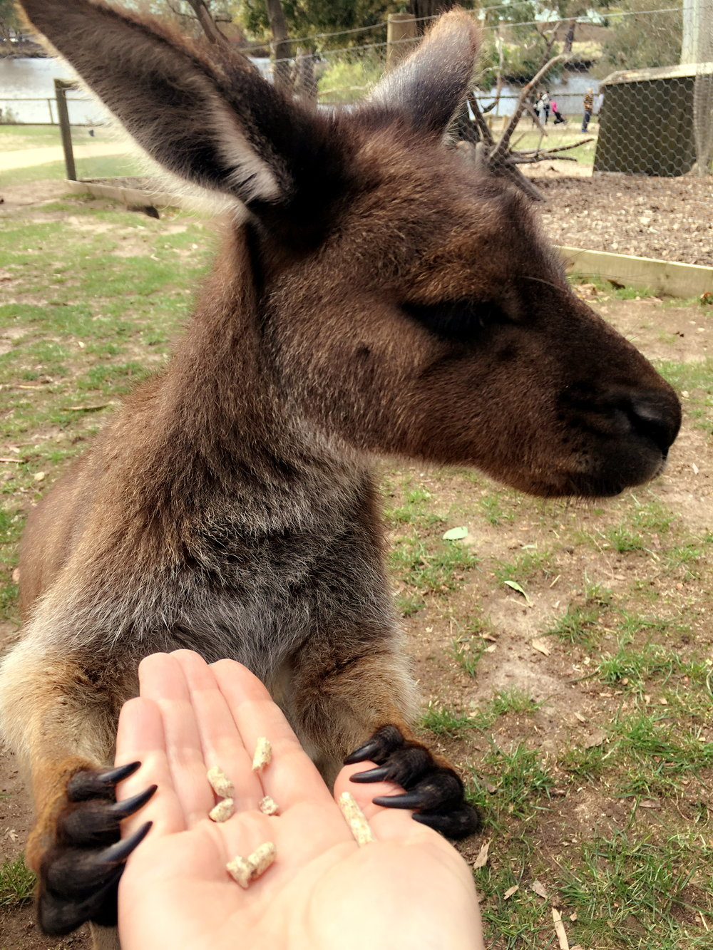 """I wanna hold your ha-aa-aand. I wanna hold your hand."" photo by Olya Kiriukhina at   Ballarat Wildlife Park"