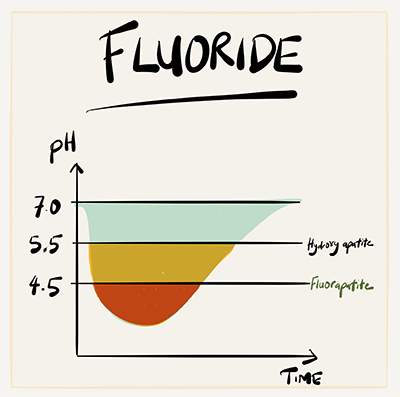 The graph shows the change in acidity over time after a 1 minute sugary mouth rinse. Firstly, it takes about 30 - 60 mins to recover back to ph 7. Secondly, fluorapatite (pH 4.5) dissolves much less than hydroxyapatite (pH 5.5).