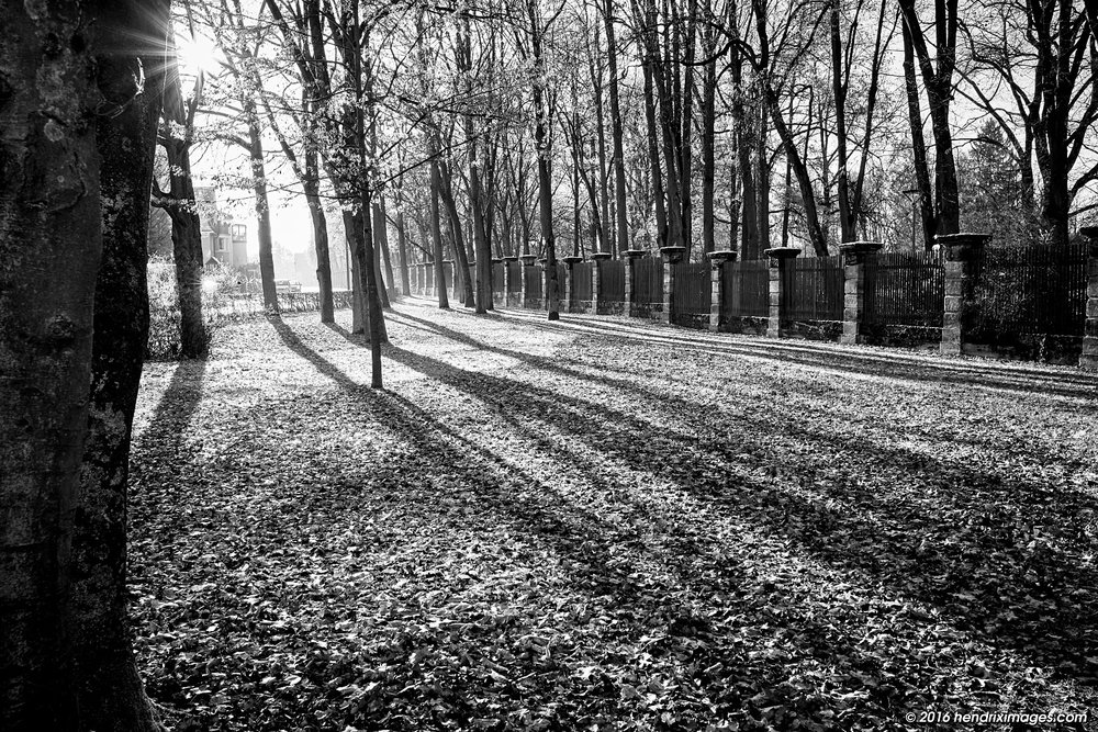 Contre Jour in the park, seen with Fuji XF 23 mm f/2 WR on Fuji X-Pro2, developed in CO Pro 10
