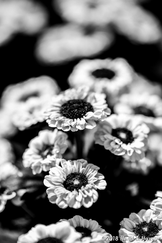 Macro flower composition, Micro Nikkor AF-S 105mm f/2.8G VR @f/5.6, 1/250sec, ISO 64