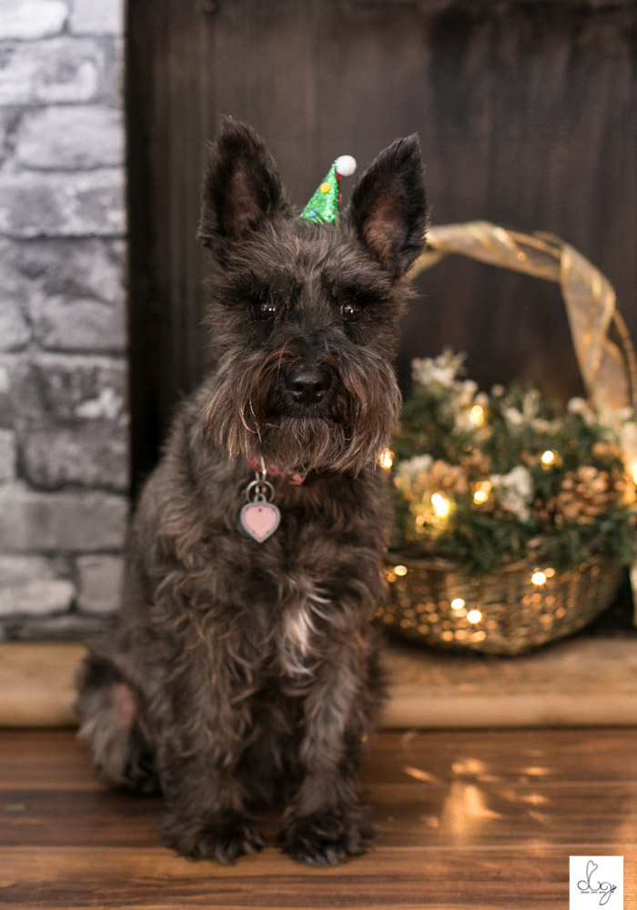 Belle Christmas Photo Shoot 2015 LO RES-9441.jpg