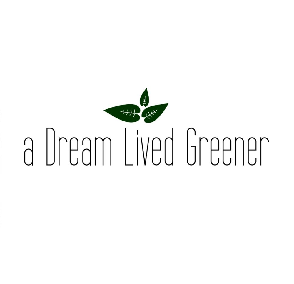 a dream lived greener plastic free products ottawa