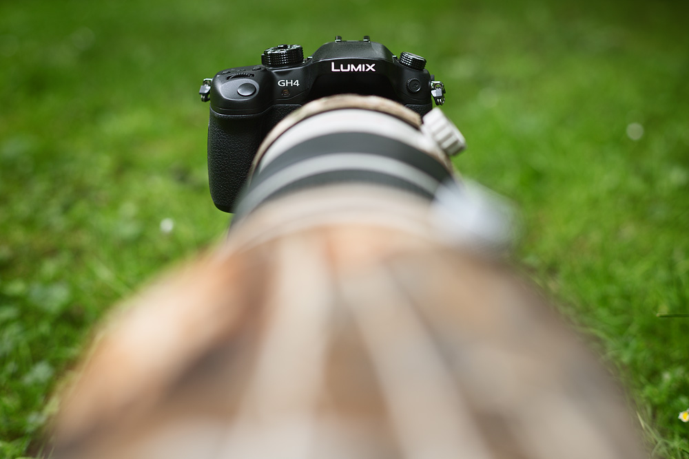 GH4 with canon 500mm ƒ4 IS